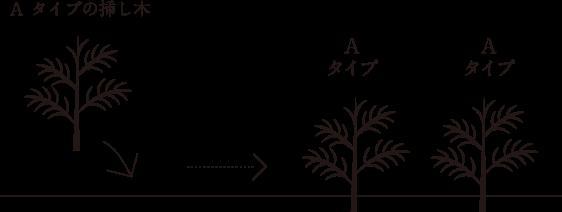 阿蘇南郷檜:挿し木の場合