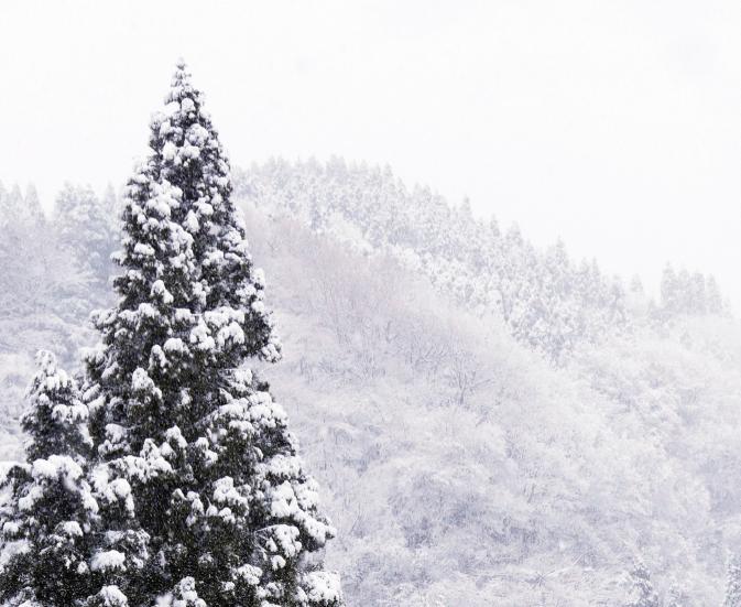 阿蘇の気候、風土で育つ。