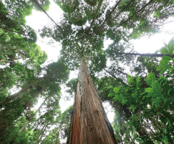 美しい材は、美しい森から生まれる。百年先の森のあり方を見つめる。