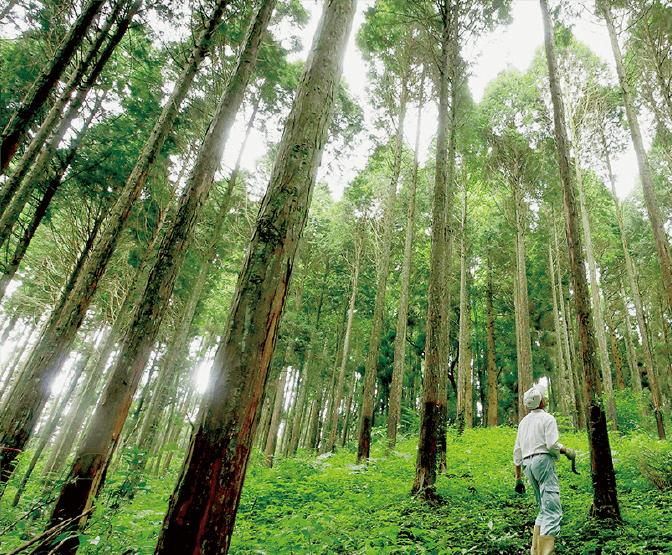 阿蘇 南郷檜の森01