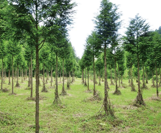 阿蘇 南郷檜の森02