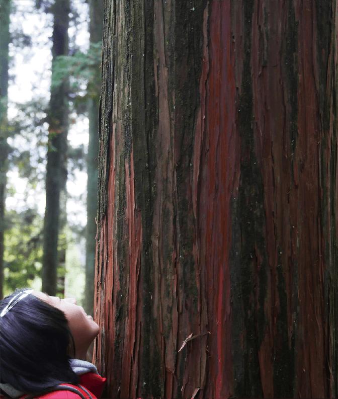 阿蘇 南郷檜の森06